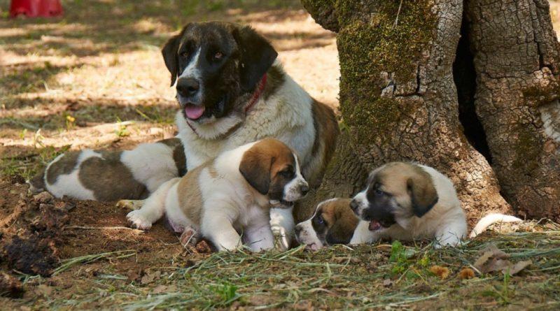 Rafeira mit Jungen